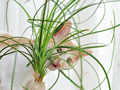 Giftige planten voor katten
