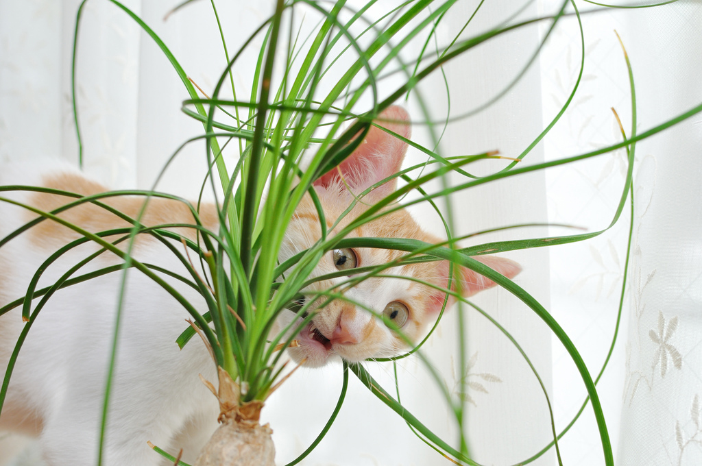 giftige planten katten